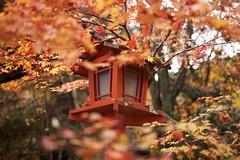 IMG_2858 (Thomo13) Tags: autumn red fall leaves japan canon temple eos kyoto mark ii 5d kouyou 紅葉 秋 jinja redleaves koyo momoji kuwayama 京都の紅葉 gettyimagesjapanq4
