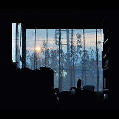 Sunset Through the Curtains (hidesax) Tags: blue trees sunset sky black color silhouette japan dark bedroom nikon room curtain saitama ageo d90 sunsetthroughthecurtains nikond90 tamronspaf2875mmf28xrdi hidesax