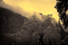 Ambrotype: Gathering Storm above Cathedral Rocks (doug_r) Tags: california blackandwhite bw ambrotype yosemitevalley cathedralrocks blancetnoir fauxir fauxinfrared gatheringstorm img7398 canon1740f40l canon5dmkii pacificaphotography crosenoffphotographyllcallrightsreserved oddprocessingexperiment bwconvagefx200rd485grainhardambrotype winterofexperimentation