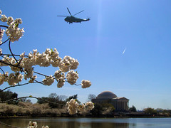 This would be the photograph of both the abovementioned things in question, the Jefferson Memorial and some cherry blossoms.