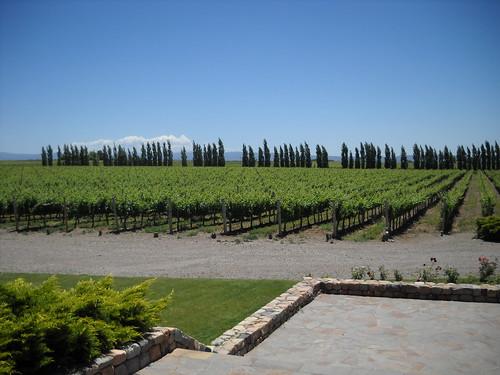 [Mendoza] Belíssima paisagem