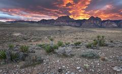 Red Rock Blowing up (D Breezy - davidthompsonphotography.com) Tags: redrockcanyon sunset cactus storm clouds canon unitedstates desert lasvegas nevada 1740f4l clarkcounty 1740mml 5dmarkii canon5dmarkii