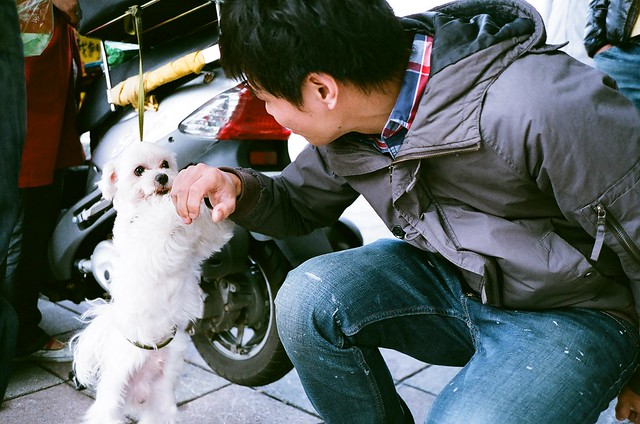 超可愛的西藏狗狗