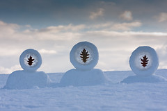 3 Ice Leaf Circles (3 Little Inuit in a Row) (escher is still alive) Tags: park winter red snow ice leaves leaf oak december circles cumbria inuit homage ephemeral discs landart naturalart 2010 enviro andygoldsworthy dallam milnthorpe enviroart richardshilling