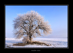 (tozofoto) Tags: morning winter light snow tree colors canon landscape bravo frost hungary natur zala abigfave anawesomeshot tozofoto