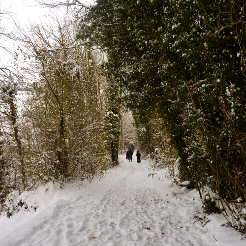 Chilham in the snow ~ trail around lake