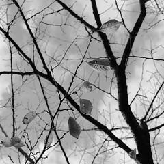 late autumn... (hiromi kawaguchi |  ) Tags: film japan town nikon  fm2   blackwhitephotos