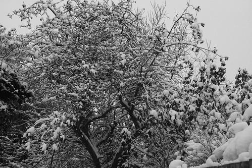 Snow-Nov_10_8