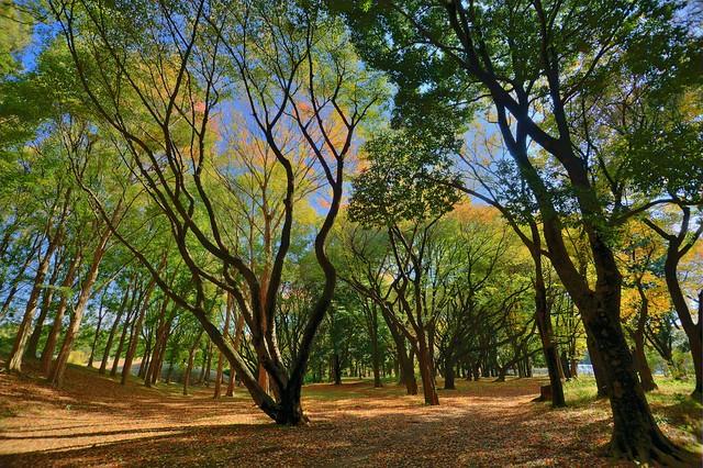 武蔵野公園でHDR #3