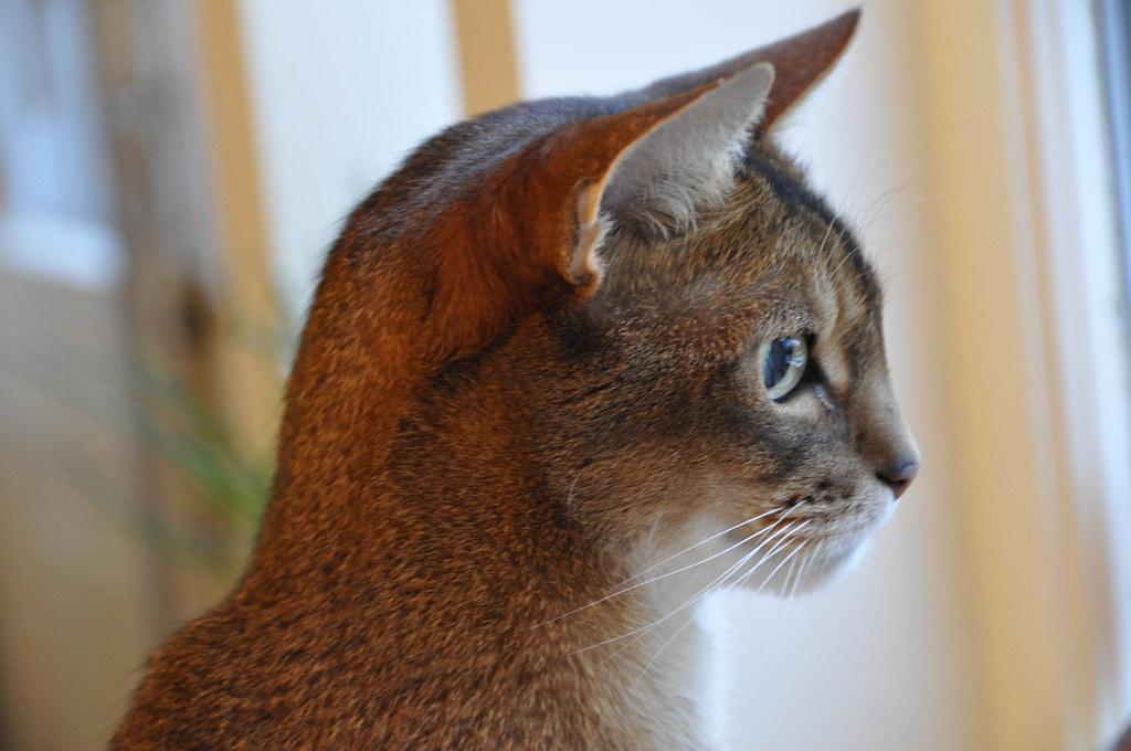 丸い猫の横顔