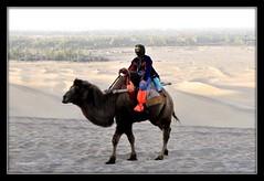 Qool at Dunhuang Mingsha Shan (Azmi Bogart) Tags: sand desert camel shan dunhuang mingsha qool