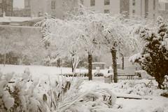 IMG_6461 (pellegrini_paris20) Tags: snowflake schnee white snow paris canon eos flake neige weiss blanc ville flocons flocon itsnows flocke flocken schneeflocke schneit flocondeneige souslaneige esschneit floconsdeneige ilneige 1000d