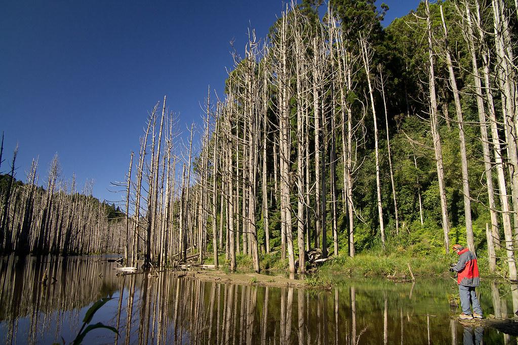水漾森林 一張流