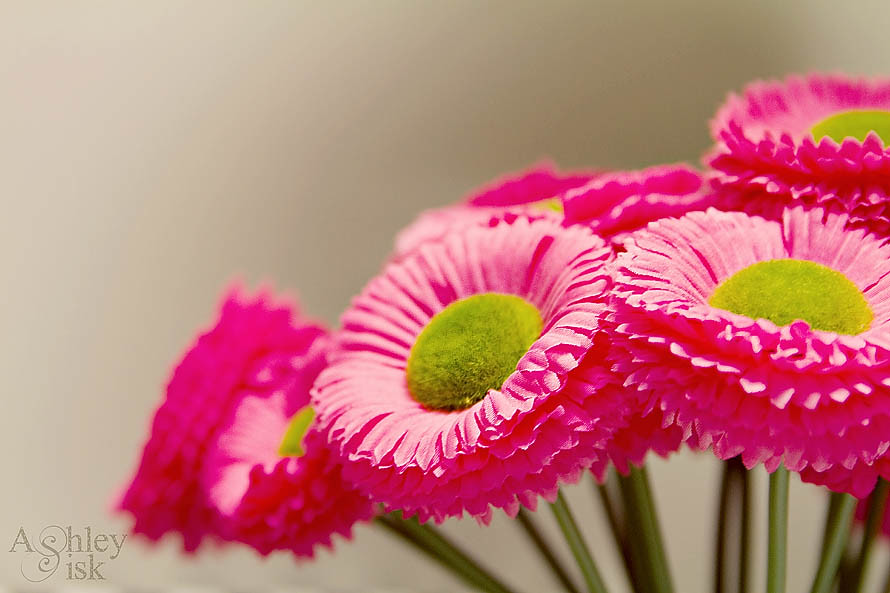 Pink Flowers RS