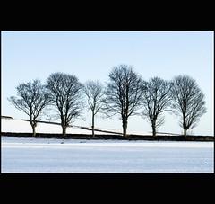 Six Winter Trees - Tayside Scotland (Magdalen Green Photography) Tags: snow scotland pretty dyke tayside scottishwinter dsc6453 calmnaturescene iaingordon scottishwinterscene sixwintertrees