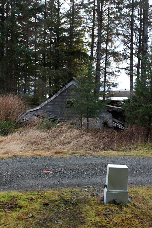 Jones house ruins collapse, Kasaan, Alaska