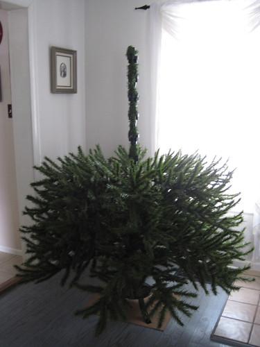 Tree- Step 3