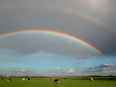 Dutch landscape with rainbows (Jan Visser Renkum) Tags: regenboog landscape rainbow cows landschap koeien zuidholland