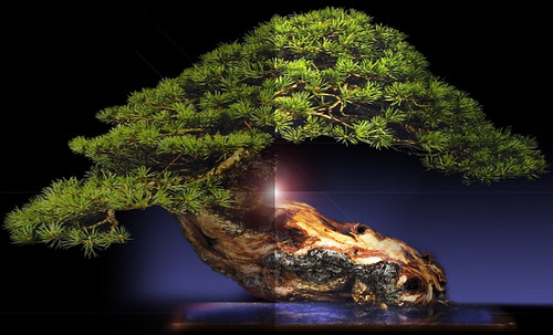 """Bonsai058 • <a style=""""font-size:0.8em;"""" href=""""http://www.flickr.com/photos/30735181@N00/5261940938/"""" target=""""_blank"""">View on Flickr</a>"""