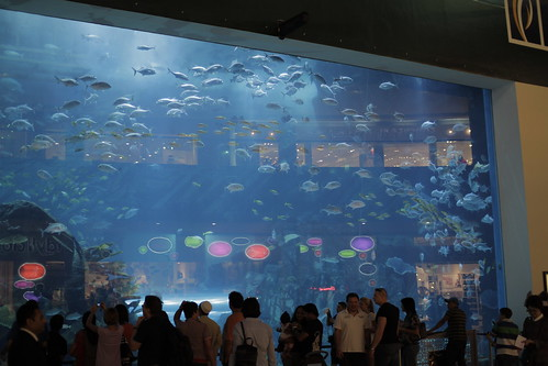 Large Aquarium in Dubai Mall