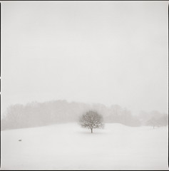 lonely IV (martin_jaeger) Tags: schnee winter tree film analog mnchen hasselblad medium format lonely baum 500cm mittelformat