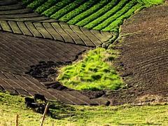 Arados. Nacimiento de agua. (Ivan Mauricio Agudelo Velasquez) Tags: agua paisaje campo ganado papa vaca tierra finca arado touraroundtheworld