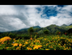 Valley of Flowers (arunsankarphotography) Tags: flowers india canon kerala flowerbed dp 1855 wayanad tpc t2i eos550d memoriesofsolitude arunsankar