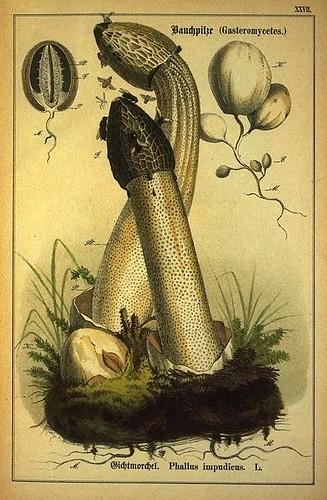 016-Allgemein verbreitete eßbare und schädliche Pilze 1876- Wilhelm von Ahles