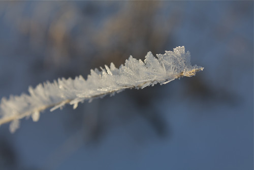 snow feathers up close