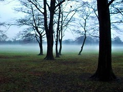 Mist in the park (DianneB 2007.) Tags: park mist sthelens sherdley