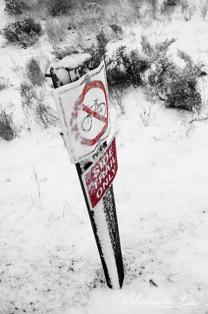 SNOW12-30-10_08