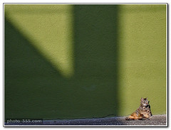 Free cat pictures (see free use rules on photo-555.com) (photo-555.com) Tags: italien venice italy naturaleza verde green nature animal cat mammal chat europa europe italia natur places natura vert gato katze grn venise venecia venezia venedig animale italie tier mammifre mamfero sugetier mammifere mammifero photo555com