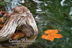 Garner Fall Leaf