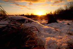 Thawing Hoar Frost, Hoohill (flatworldsedge) Tags: sunset cloud sun snow wet grass backlight droplets melting frost day glow low silho