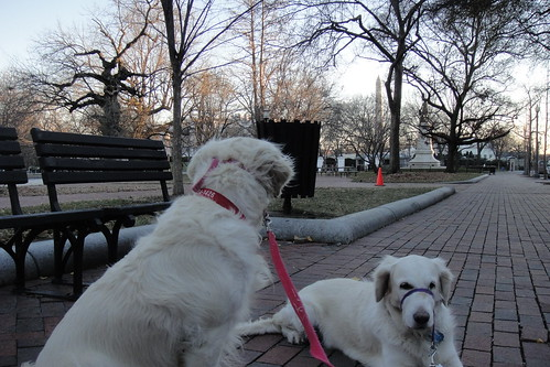 Checking out the Squirrels of Lafayette Park
