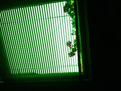 peekaboo (inez.galvez) Tags: nyc hot dogs window square san francisco sill apartment time broadway blinds kebab shish stands bougainvilleas freshnez
