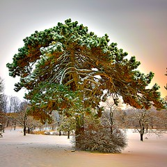 That One Tree (10iggie) Tags: park longexposure winter snow tree night arbol glow snowybranches