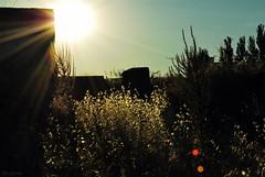 Summer colour scene (h) (lblozano) Tags: espaa contraluz spain guadalajara mohernando pajas humanes