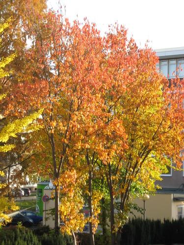 Goldener Oktober I