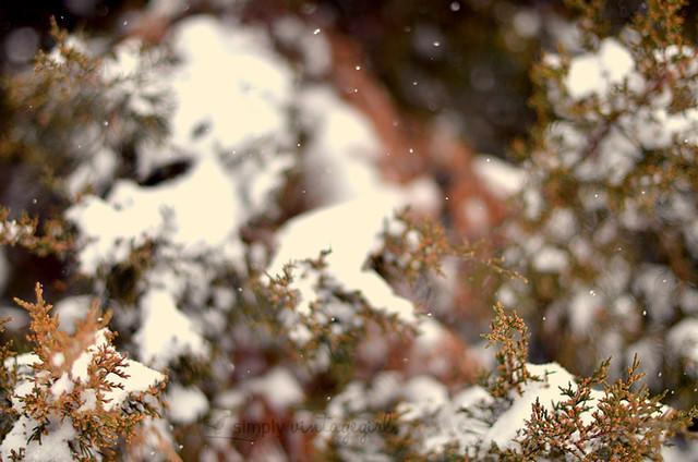 settling snow
