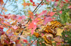 Colorful leaves (Rafakoy) Tags: pictures park city nyc newyorkcity autumn lake ny newyork color colour tree fall water colors leaves digital season landscape photo leaf pond nikon focus colorful colours with image photos centralpark manhattan picture taken images colourful tress afsnikkor18105mmvr nikond7000