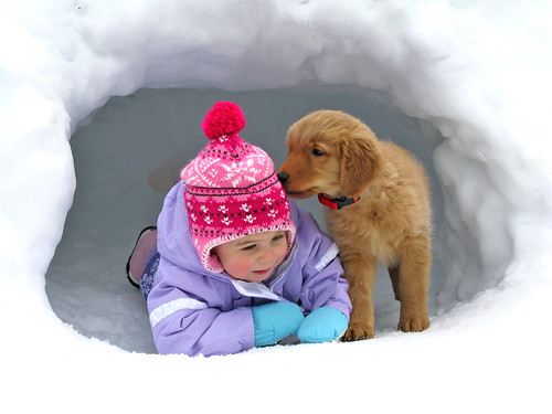 cute puppies playing in snow. Ryder Lou (the cute puppy)