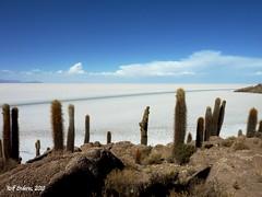 Sal de la vida (Rolf Enderes) Tags: desert salt bolivia desierto sal wste uyuni salz salardeuyuni renp
