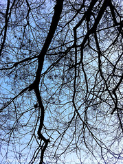 ip4nature13 (Edwin Loyola) Tags: nature iphone4 edwinsloyola edwinloyola iphone4imagery iphone4images