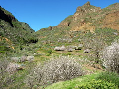 Gran Canaria - Guayadeque in the Winter...