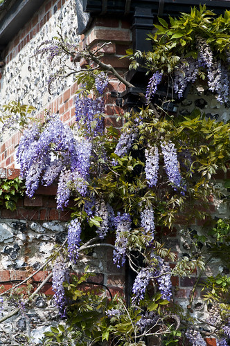 Heale House Wisteria - Copyright R.Weal 2011