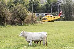 Elisoccorso_DSC9508 (Davide Dell'Agostino) Tags: 2016 berbenno incidente elicopter elicottero soccorso