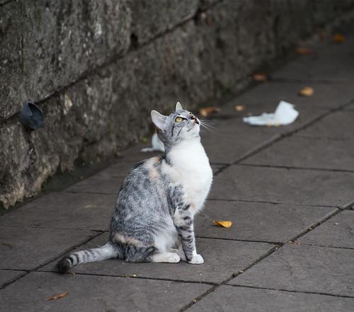 A cat ©  Andrey