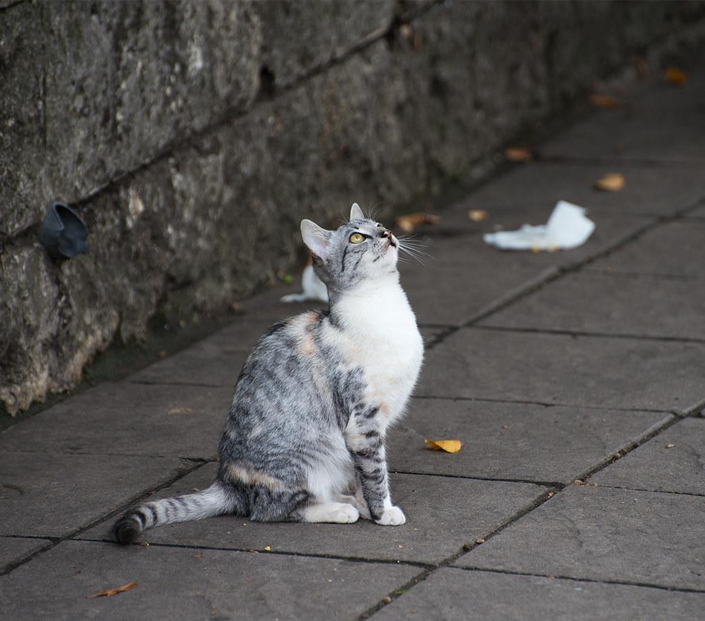 фото: A cat