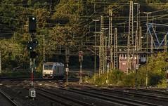 1643_2016_09_23_Köln_West_RHC_1285_116_Lz_Ehrenfeld (ruhrpott.sprinter) Tags: ruhrpott sprinter deutschland germany nrw ruhrgebiet gelsenkirchen lokomotive locomotives eisenbahn railroad zug train rail reisezug passenger güter cargo freight fret diesel ellok kölnwest als db mrcedispolok nxg nationalexpress lbl locon nrail pcw rhc sbbc siemens sncb vtgd es64p001 es64f4 0272 127 146 155 185 186 189 260 275 408 482 620 1261 1275 6127 6146 6189 2275 eurosprinter gravita dosto chemion schienen walzzeichen outdoor logo natur graffiti